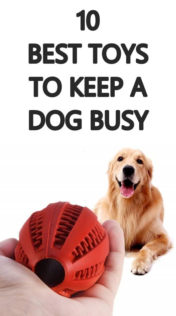 Many Dog Owners Have To Leave Their Dogs Home Alone When They Go To Work Every Day Just Like Humans Dogs Get Bor In 2020 Bored Dog Interactive Dog Toys Best