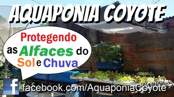 Protegendo as alfaces do sol e da chuva! - 26/01/2017 - Aquaponic System...