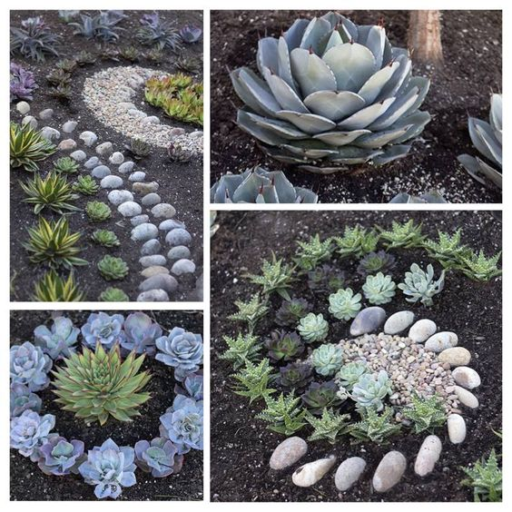 Get creative with your succulents design your front yard for Low maintenance patio plants