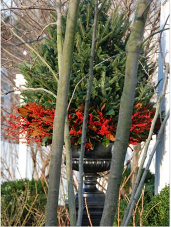 Great way to dress up an outdoor Christmas tree!