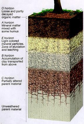 5 different type of soil profile 39 s master horizons for Information about different types of soil