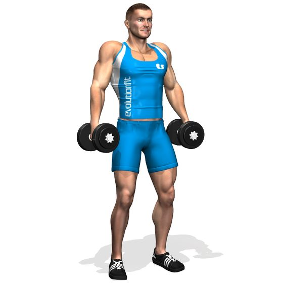 Les haussements d'épaules (shrugs) aux haltères travaillent principalement sur la partie supérieure du trapèze. En tant que muscles secondaires le deltoïde et les muscles de l'avant-bras sont impliqués.