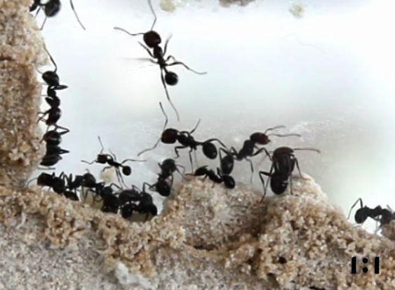 urban ant city rotterdam- studio 1:1 //