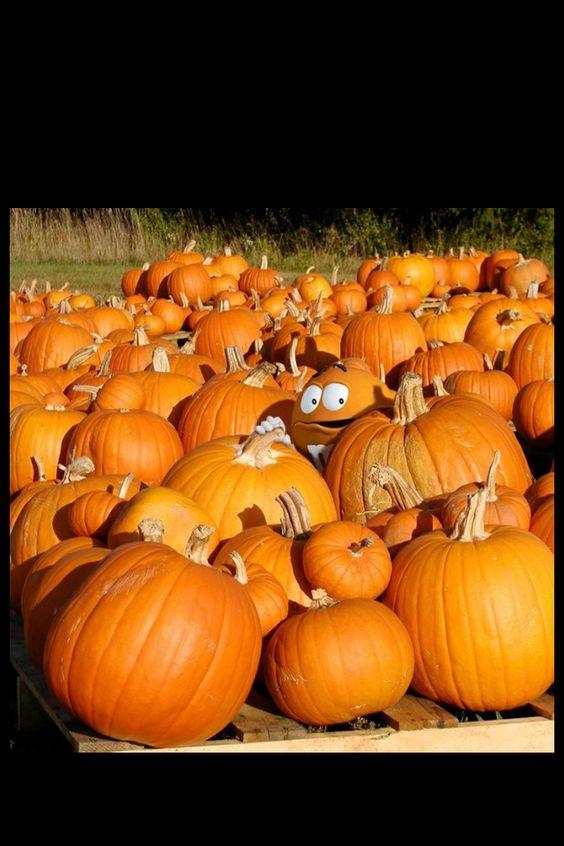 Sweet Preserved Pumpkin Recipe — Dishmaps