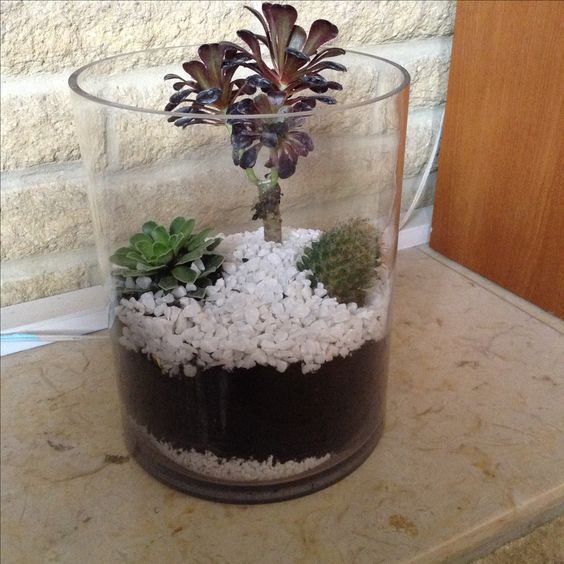 My first home made terrarium