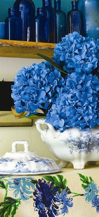 blue on blue on blue | Hydrangeas