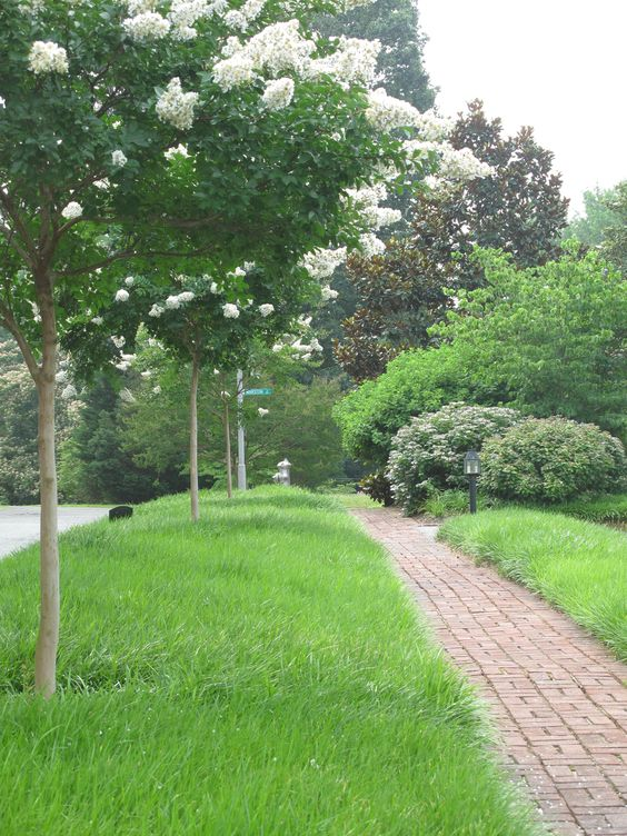 Liriope swath and Crape Myrtles Robbins Landscaping