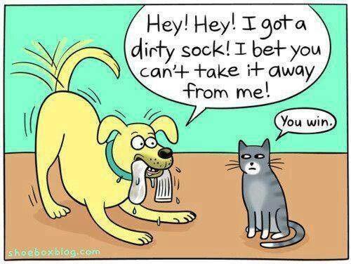 Cat says : dog, u win