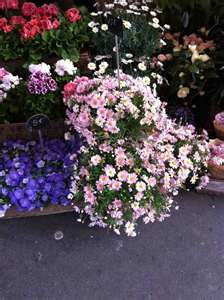 Paris, corner flower shop