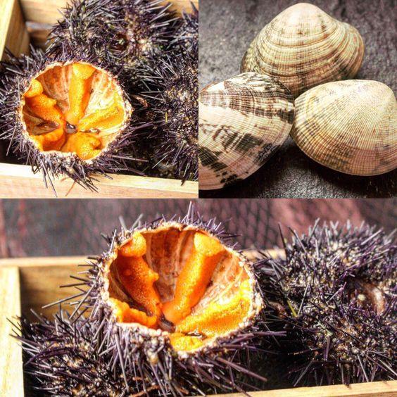 Erizos de mar y almeja japonesa