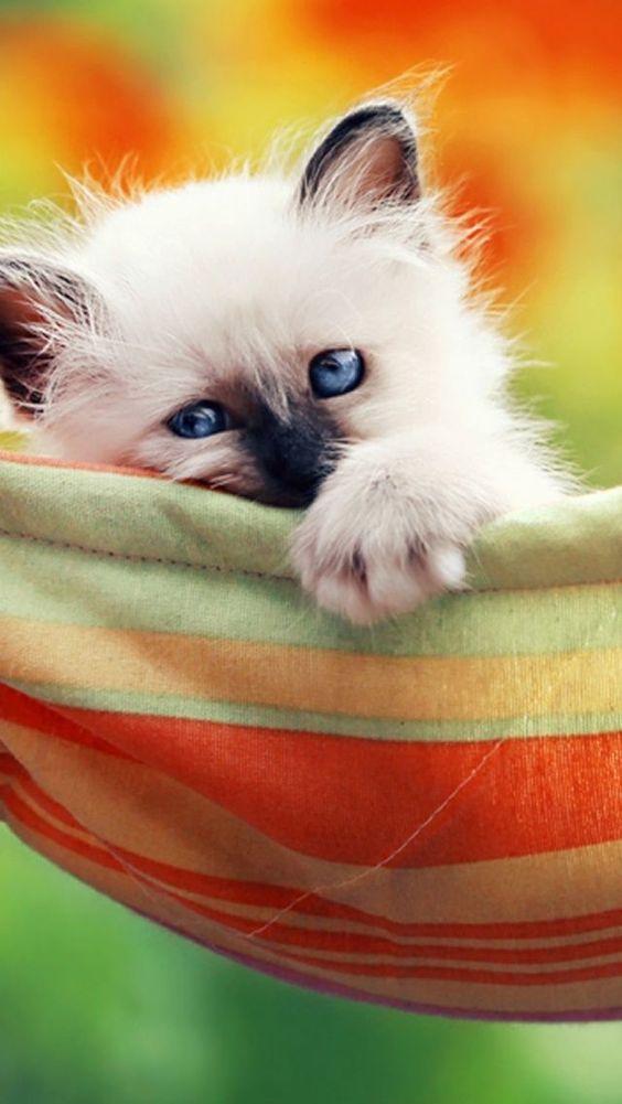 Hermoso gatito♥