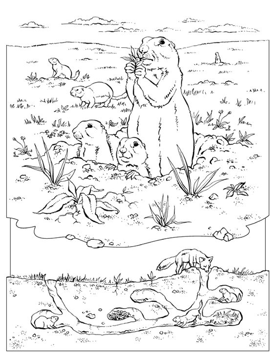 coloring pages prairie - photo#7