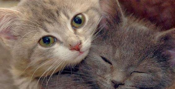 Ecomundo: Alimentación de una gata embarazada
