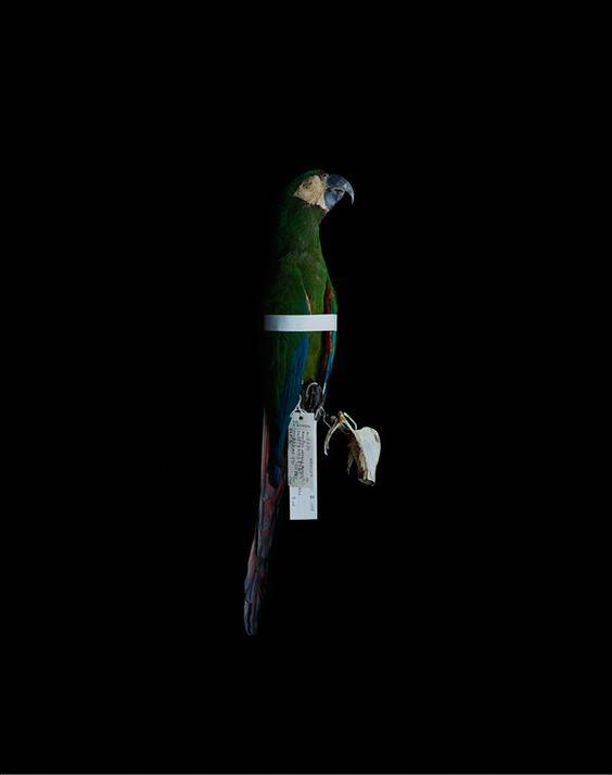 Birds and Bones - Yoshihiko Ueda | gallery 916
