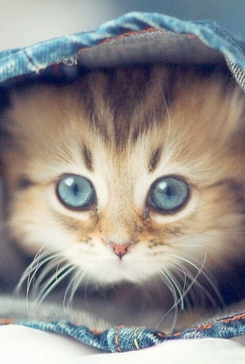 Cute Kittens For Sale In India Cute Cats Drawings Kittens Cutest