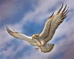 zeus symbol eagle - photo #2