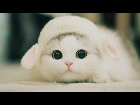 Cute Kittens Will Melt Your Heart Kittens That Will Make You