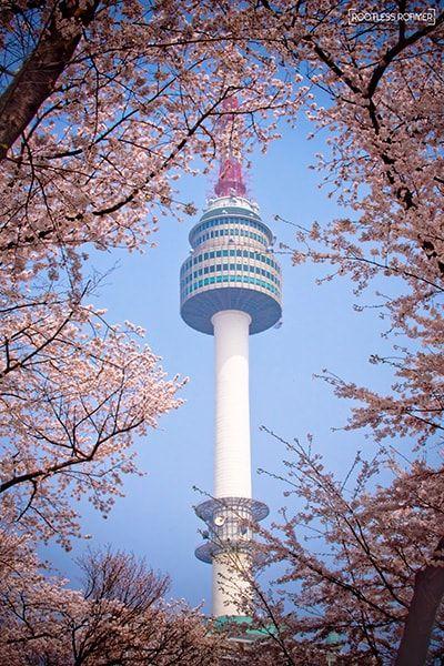 Seoul Tower Cherry Blossoms South Korea Min Korea Wallpaper Daegu South Korea South Korea Photography