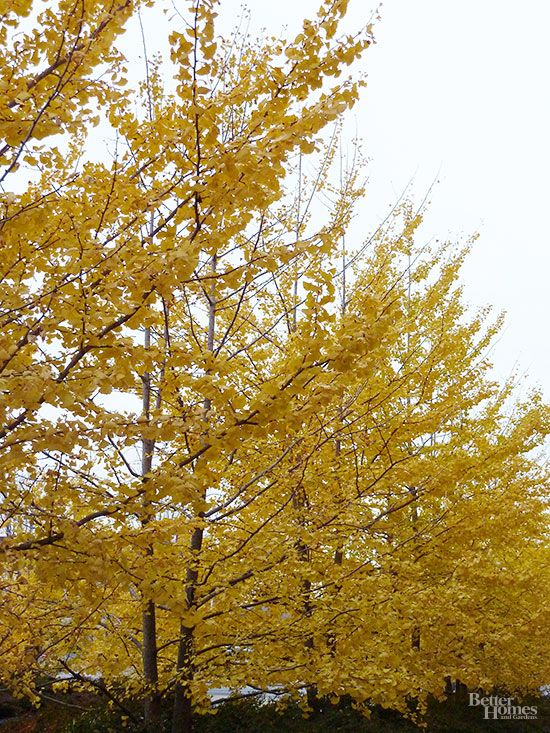 The best shade trees for your yard emperor plants and trees for Arboles de sombra para jardin