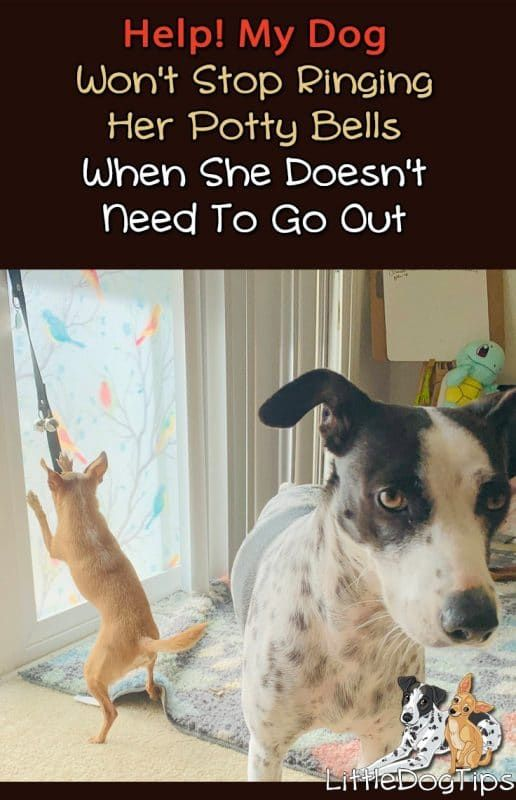 Dogtraining What To Do When Your Dog Rings Her Potty Bells All The Time For No Reason Positivetraining Potty Bells Dog Potty Bell House Training Dogs