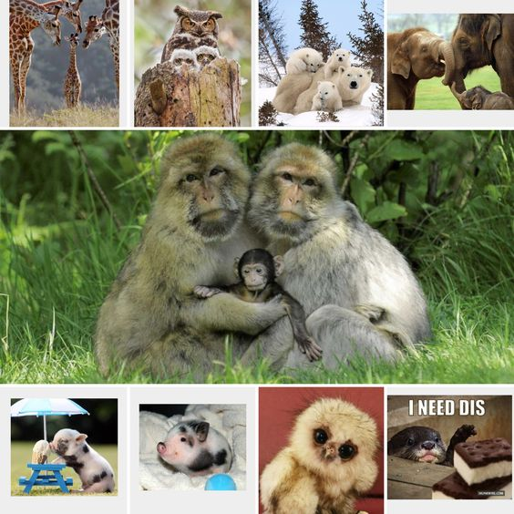All my animals!! Not really. Just animals.
