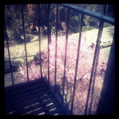 The Happy Pink Tree.