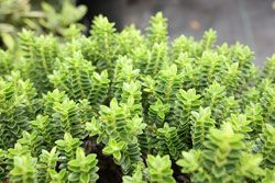 Beautiful, Shrubs and The plant on Pinterest