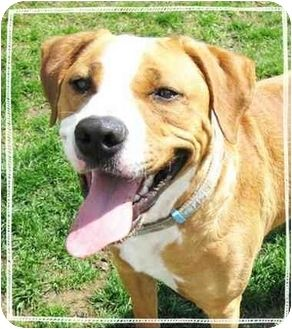 My name is Kopper!  I am already neutered, housetrained, up to date with shots, good with kids, and good with dogs.  So I don't understand why Bob won't let Jane adopt me!