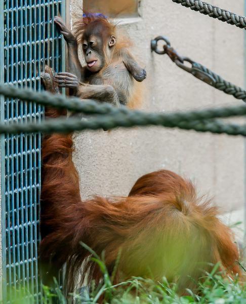 Das Affenbaby mit dem halben Arm: Bild 8 von 39