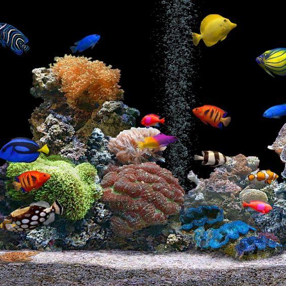3d Aquarium Live Wallpaper: Fish Aquariums, Moving Desktop Backgrounds And Aquarium On