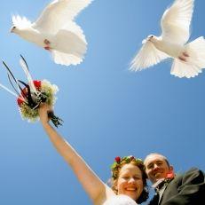 Bruidsduiven