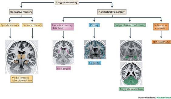 A model for memory systems based on processing modes rather than consciousness.