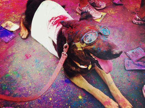 Spotted! This colorful canine was spotted (and photographed) by Dabito during The Color Run. See more photos on his blog Old Brand New!