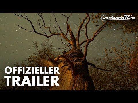 Das Geheime Leben Der Baume I Offizieller Trailer Youtube Constantin Film Leben Filme