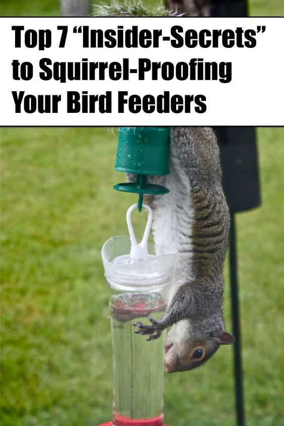 FINALLY...No more squirrels on my bird feeders!  #7 was really surprising to me...  Get all the tips at http://jbg32.com/squirrel-proof101