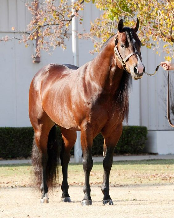 Online aqha stallion report forms