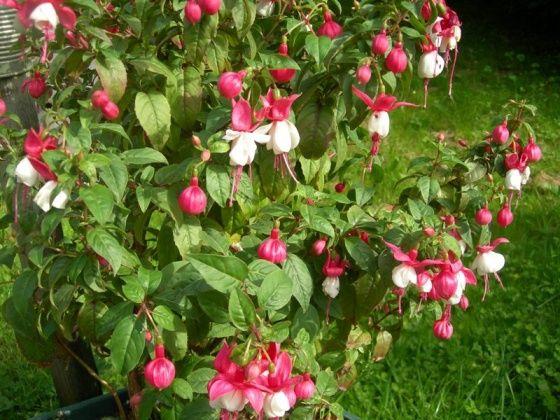 Pinterest le catalogue d 39 id es for Plante ombre exterieur