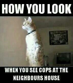 """""""How you look when you see cops at the neighbor's house"""""""