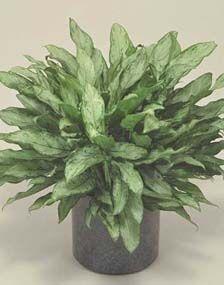 Hardy Indoor Plants Indoor Plants Pinterest 400 x 300