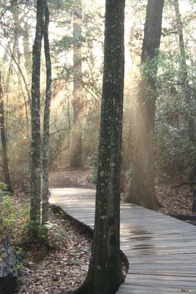 Houston Arboretum & Nature Center       1 / 3 Previous imageEnlargeNext image  4501 Woodway  Houston TX 77024  Neighborhood:Memorial Park/Washington Corridor  Phone: (713) 681-8433