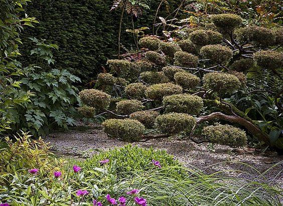 La taille en nuage - Nuage dans un jardin zen