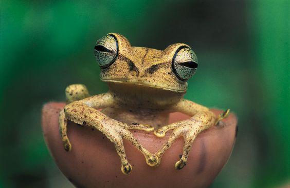 Frog at peace.