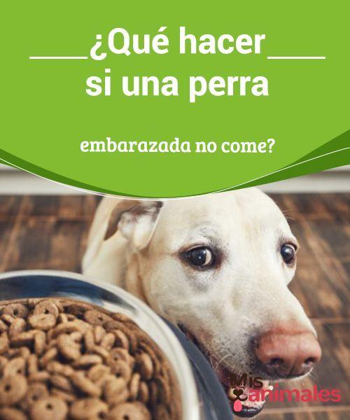 Pin En Mascotas