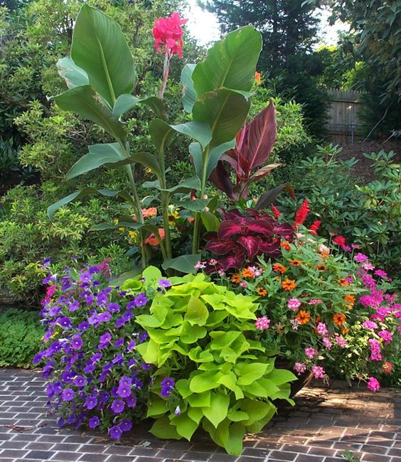 8 Stunning Container Gardening Ideas: Containers With Pizazz ! Not Your Ordinary Container