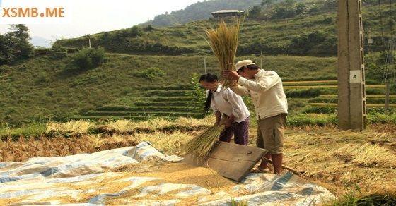 Giấc mơ thấy đập lúa