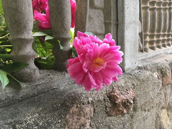 Еще забор с цветами