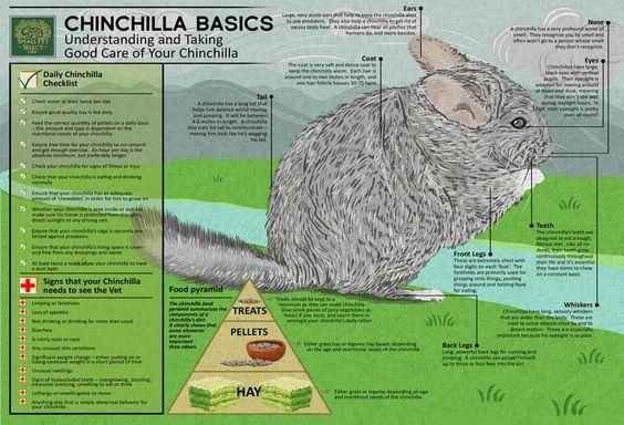 Chinchilla Basics - Small Pet Select