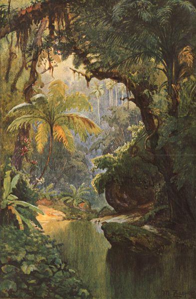 Max Zaeper-Brasilianischer Urwald