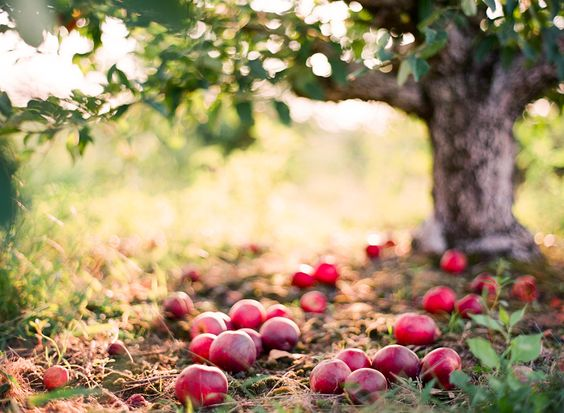 Sweet September » Lindsey Ocker Photography