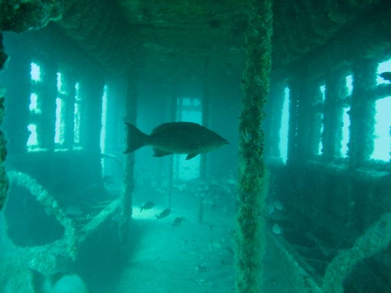 NYC is re-purposing its old Subway cars as artificial reefs